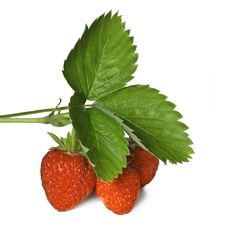 Free Strawberry With Leaves Isolated Stock Photos - 15775263