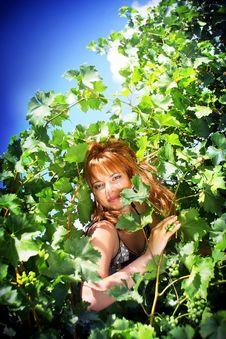 Girl In The Vineyard Stock Photos