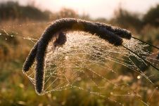 Free Dry Grass In Spiders Web Stock Image - 15777591