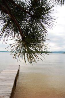 Free Pine Tree And Dock Stock Photo - 15777640