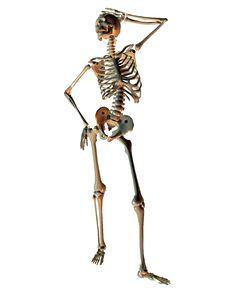 Free Skeleton In Model Pose Stock Photos - 15778593