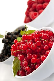 Free Fresh Red Currant Royalty Free Stock Image - 15778946