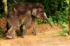 Baby Elephant Royalty Free Stock Photography