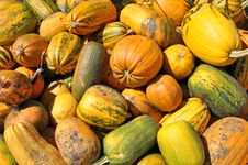 Free Background From Ripe Pumpkins. Stock Photos - 15779833