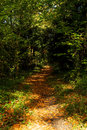 Free Forest Path Royalty Free Stock Images - 15785349