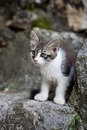 Free Kitten Stock Photos - 15785643