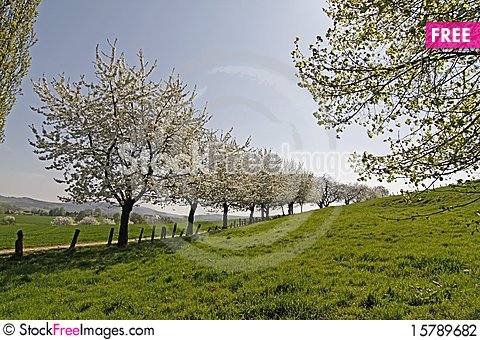 Footpath with cherry trees in Hagen, Germany Stock Photo