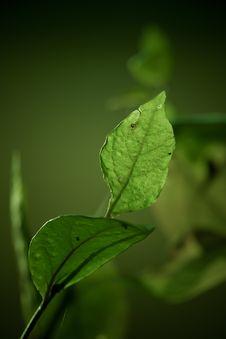 Free Green Leaf Against Dark Background Stock Image - 15780511