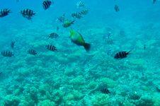 Free Astonishing Undersea World Of Red Sea. Stock Photos - 15781643