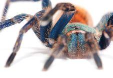 Free Spider Detail Royalty Free Stock Photos - 15781668