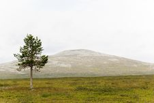 Free Hiking In Lapland Royalty Free Stock Photography - 15783007