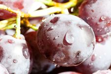 Free Fresh Red Grape Royalty Free Stock Photo - 15783815
