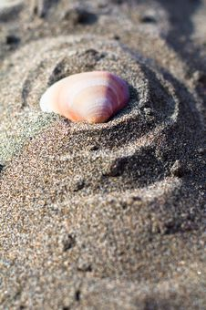 Free Shell On The Beach Royalty Free Stock Photos - 15786088