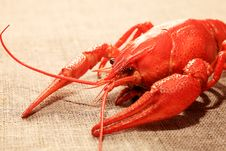 Free Lobster Stock Photo - 15787590