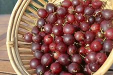 Free Red Gooseberries Closeup Stock Image - 15787831