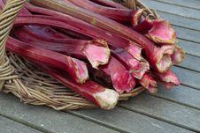 Fresh Rhubarb Shoots  Closeup On Willow Basket Stock Photography