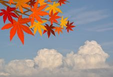 Free Autumn Leaves Frame Royalty Free Stock Photos - 15787948