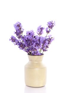 Free Aromatic Purple Lavender Stock Photo - 15788580