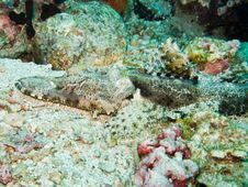Crocodile Fish Royalty Free Stock Photo