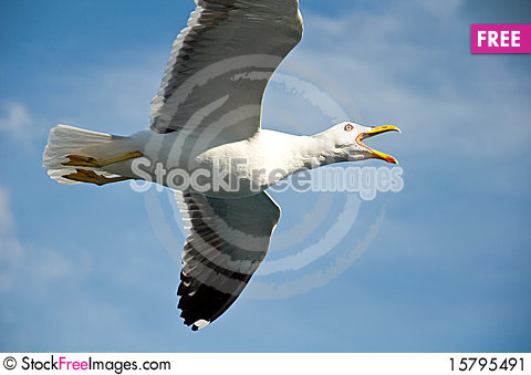 Angry seagull Stock Photo