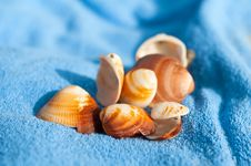 Free Shells On  Towels Stock Photos - 15790843