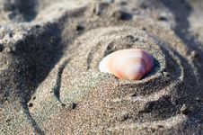 Free Shell On The Beach Royalty Free Stock Photos - 15790898