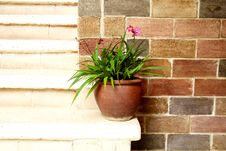 Free Old Grass Pot Royalty Free Stock Image - 15791926