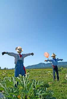 Free Scarecrows In The Field Royalty Free Stock Photography - 15792047