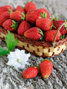 Free Strawberry Basket Royalty Free Stock Photos - 15792128