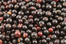 Free Black Currant Closeup Stock Photo - 15792670