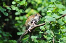Monkey With Baby Royalty Free Stock Photography