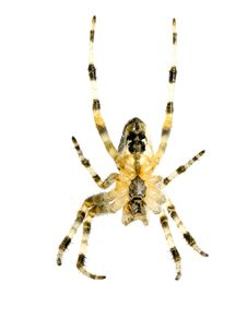 Free Spider. Stock Photography - 15793422