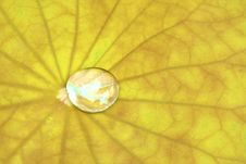 Free A Bead On A Lotus Leaf Stock Photography - 15793822