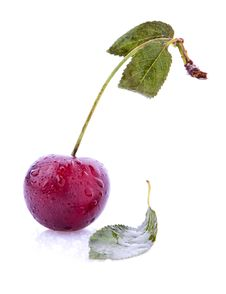 Free Sweet Cherry Isolated Over White Background Stock Images - 15795084