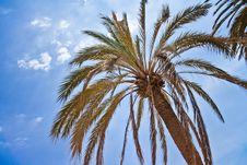 Free Palms Royalty Free Stock Photos - 15795198