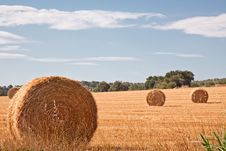 Free Hay Stock Images - 15795214