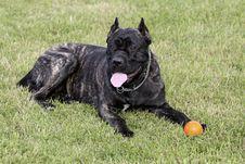 Free Dog Stock Images - 15795974