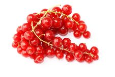 Free Red Currant Royalty Free Stock Photos - 15797268