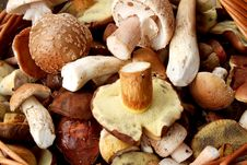 Free Detail Of Fresh Autumn Mushroom Stock Images - 15797634