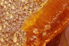 Free Honeycomb Stock Image - 15799661
