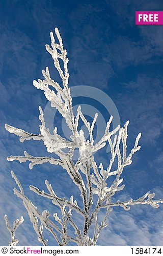 Winter branches with snow against blue sky with clouds #8 Stock Photo