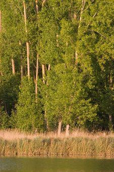 Free Tree In Lake Royalty Free Stock Photos - 1580358