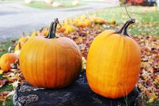 Free Pumpkins Royalty Free Stock Photography - 1580517