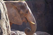 Free Elephant Royalty Free Stock Images - 1580889