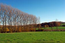 Trees Row In Autumn. Stock Photo