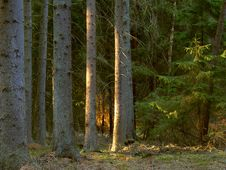 Free Green Forest Stock Photography - 1582172