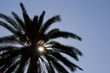 Free Palm Tree Silhouette Stock Photography - 1582882