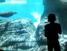 Free Water Mammal! Stock Photo - 1584890