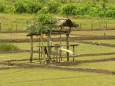 Free Small Cottage In A Paddy Field Stock Photos - 1585913