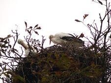 Free Storks Stock Photos - 1588363